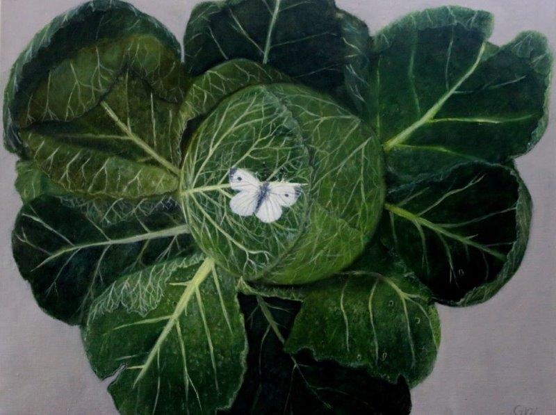 Cabbage and white butterfly 50 x 60 cm